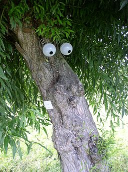 Image - tree with comical google-eyes