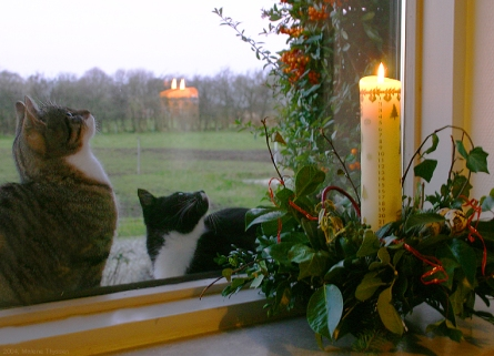 photo of two cats in a window looking at an advent candle