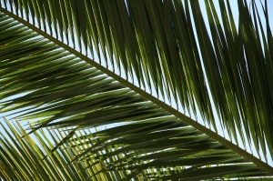photo of palm fronds