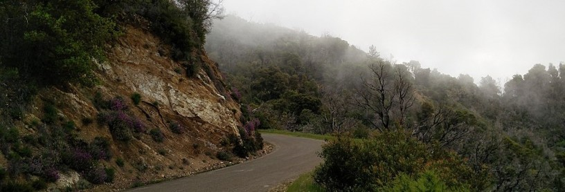 mountain road near Salinas, CA in mist