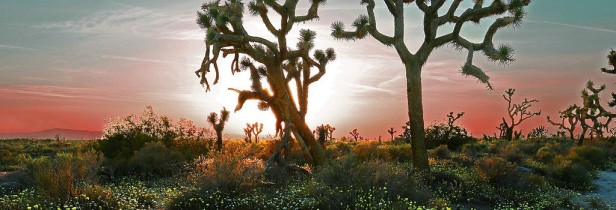 sun on desert horizon with Joshua trees