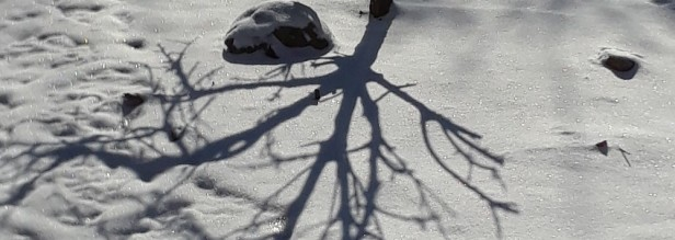 shadow of a dwarf peach on snow with snow-covered boulder