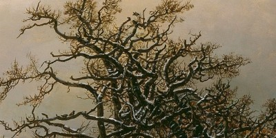 detail Oak tree by the Elbe in Winter showing top of oak tree with dry leaves against gray sky