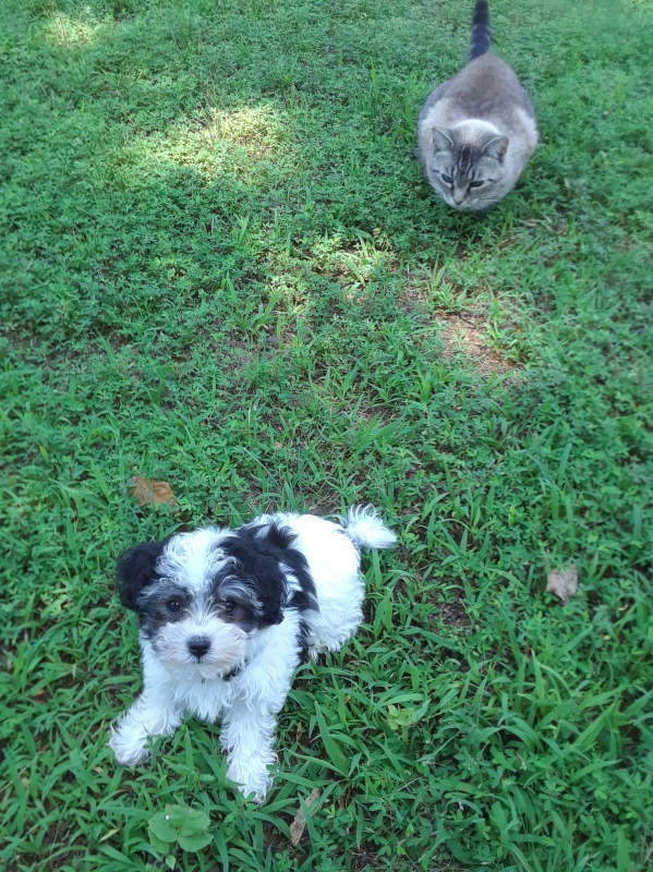 small puppy and cat on grass