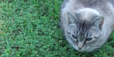 our cat on the grass