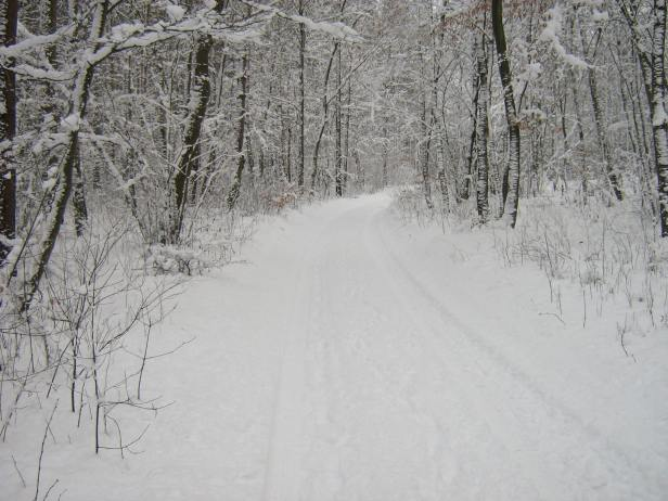 snowy road through winter woods