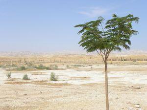 tree in a desert landscape