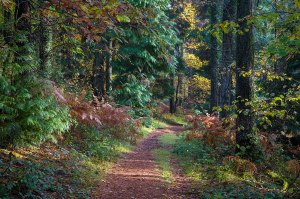 image of wooded path in autumn